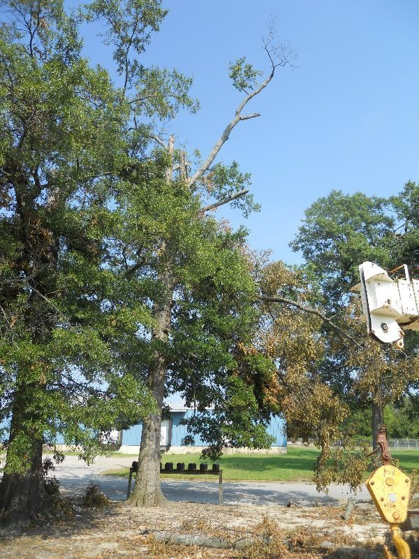 Virginia Beach Tree Removal Picture 58