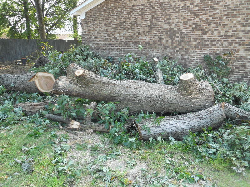 Virginia Beach Tree Removal Picture 68