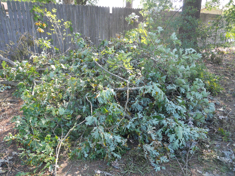 Virginia Beach Tree Removal Picture 71