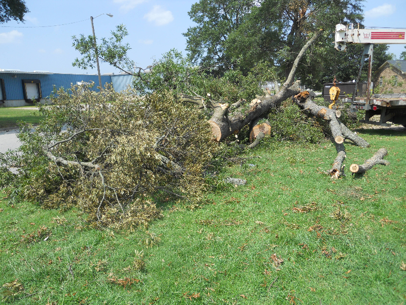 Virginia Beach Tree Removal Picture 73