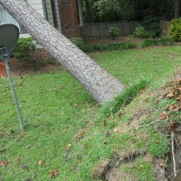 Virginia Beach Tree Removal Picture 21