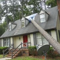 Virginia Beach Tree Removal Picture 9