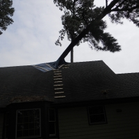 Virginia Beach Tree Removal Picture 5