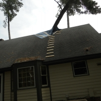 Virginia Beach Tree Removal Picture 25