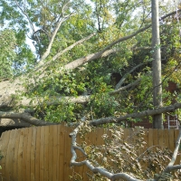 Virginia Beach Tree Removal Picture 4