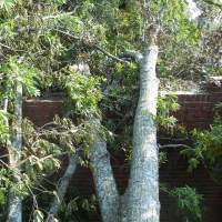 Virginia Beach Tree Removal Picture 37