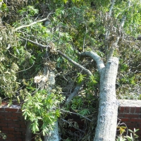 Virginia Beach Tree Removal Picture 38