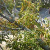 Virginia Beach Tree Removal Picture 10