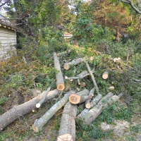 Virginia Beach Tree Removal Picture 40