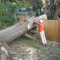 Virginia Beach Tree Removal Picture 7