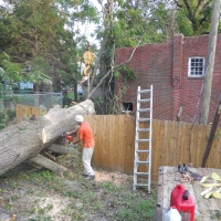 Virginia Beach Tree Removal Picture 27