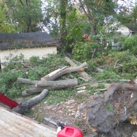 Virginia Beach Tree Removal Picture 45