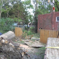Virginia Beach Tree Removal Picture 46