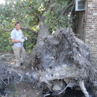 Virginia Beach Tree Removal Picture 53