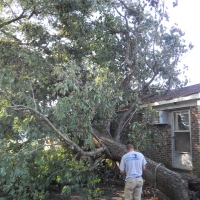 Virginia Beach Tree Removal Picture 54
