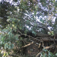 Virginia Beach Tree Removal Picture 57