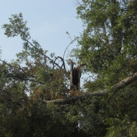 Virginia Beach Tree Removal Picture 17