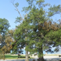Virginia Beach Tree Removal Picture 61