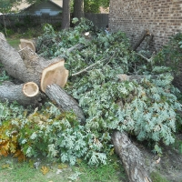 Virginia Beach Tree Removal Picture 67