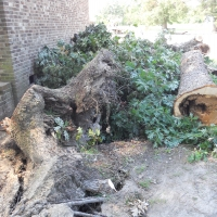 Virginia Beach Tree Removal Picture 0