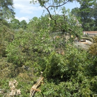 Virginia Beach Tree Removal Picture 74