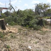 Virginia Beach Tree Removal Picture 75