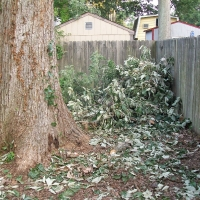 Virginia Beach Tree Removal Picture 78