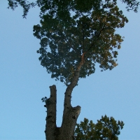 Virginia Beach Tree Removal Picture 79