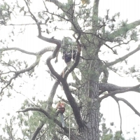 Virginia Beach Tree Removal Picture 12