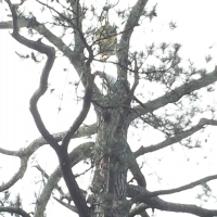 Virginia Beach Tree Removal Picture 83