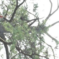 Virginia Beach Tree Removal Picture 84