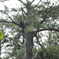 Virginia Beach Tree Removal Picture 85