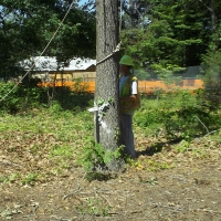 Virginia Beach Tree Removal Picture 87
