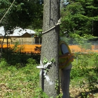 Virginia Beach Tree Removal Picture 47