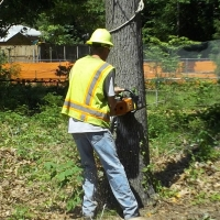 Virginia Beach Tree Removal Picture 6