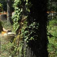 Virginia Beach Tree Removal Picture 93