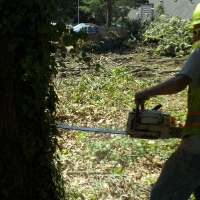 Virginia Beach Tree Removal Picture 95