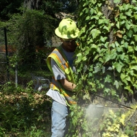 Virginia Beach Tree Removal Picture 96