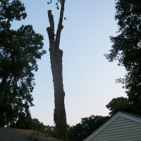 Virginia Beach Tree Removal Picture 14
