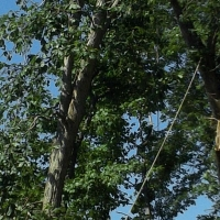 Virginia Beach Tree Removal Picture 99