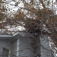 Virginia Beach Tree Removal Picture 115