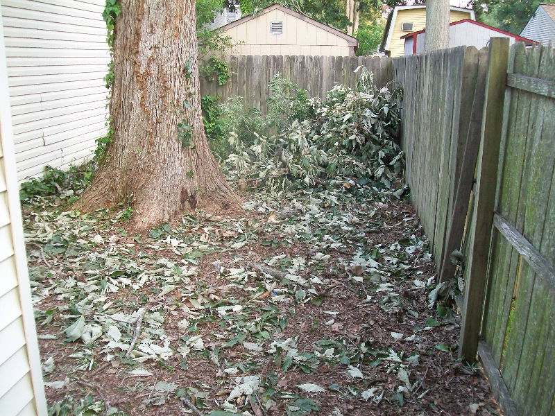 Virginia Beach Tree Removal Picture 76