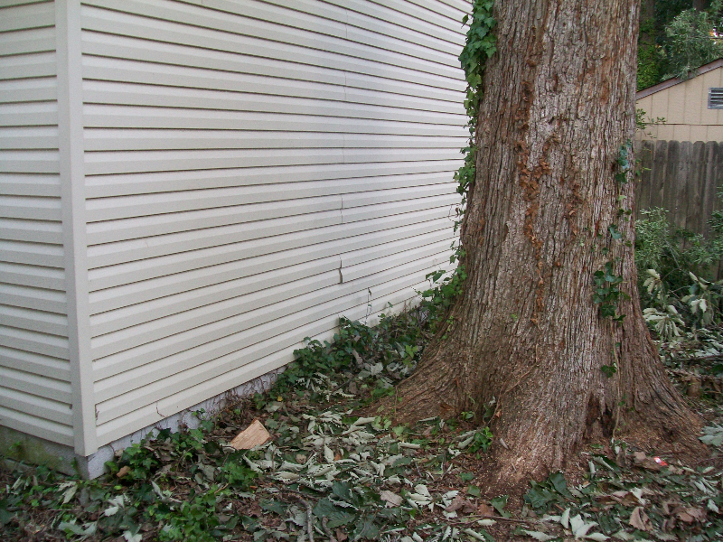 Virginia Beach Tree Removal Picture 77