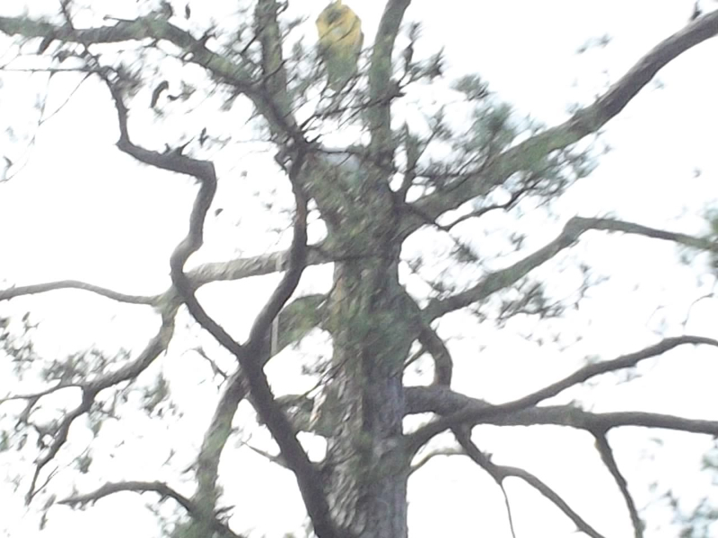 Virginia Beach Tree Removal Picture 81