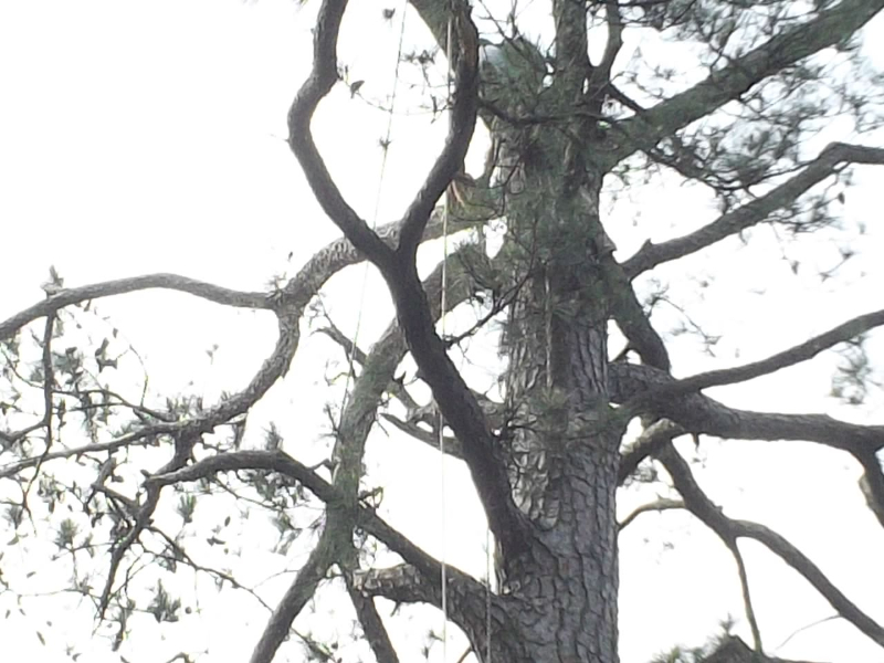 Virginia Beach Tree Removal Picture 19
