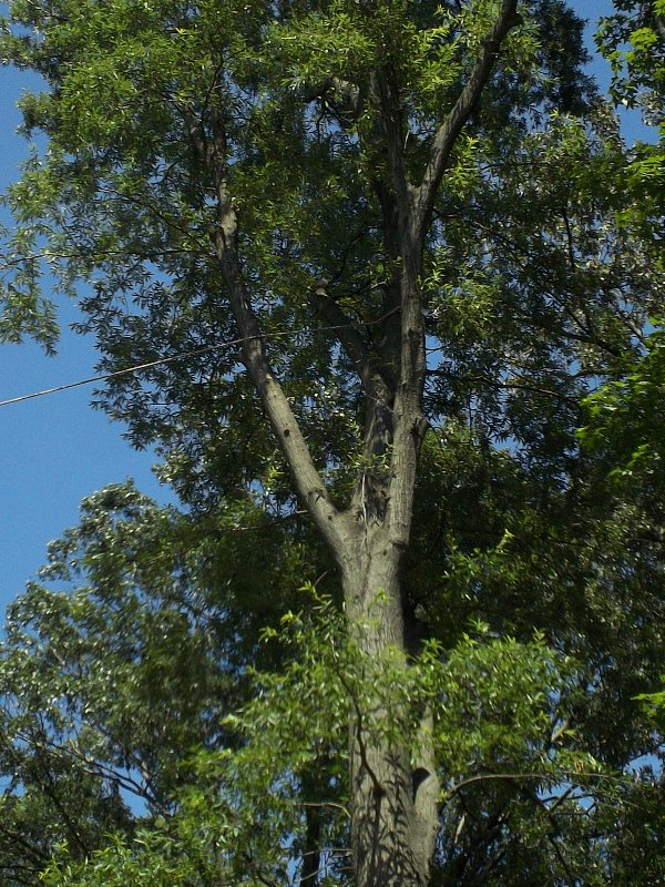 Virginia Beach Tree Removal Picture 60