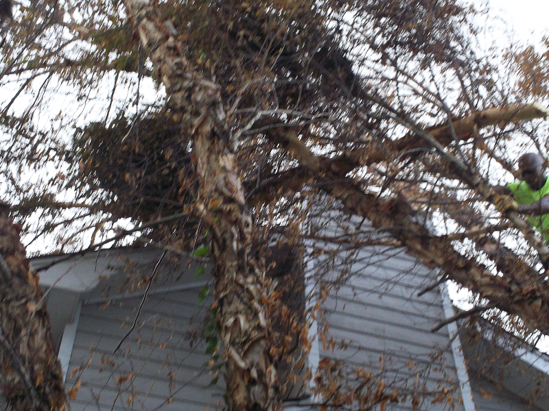 Virginia Beach Tree Removal Picture 113