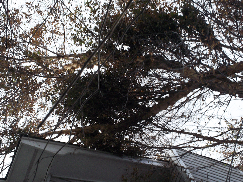 Virginia Beach Tree Removal Picture 116
