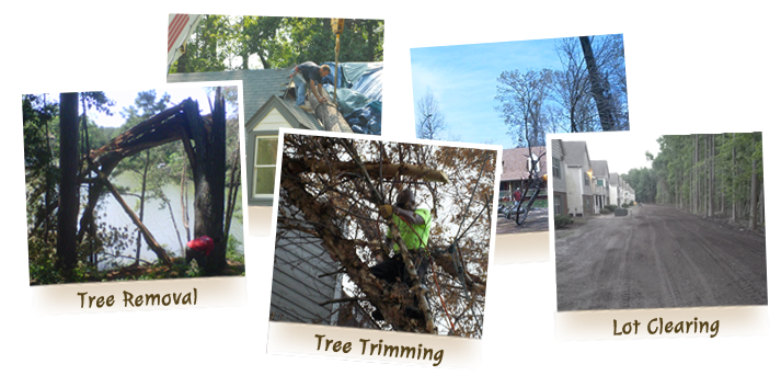 advance-tree-care-in-virginia-beach-virginia-slide-2