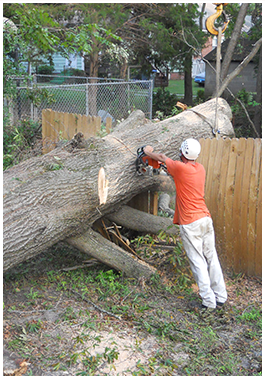 Advance Tree Care in Virginia Beach, VA Tree Services and Tree Removal Image 2